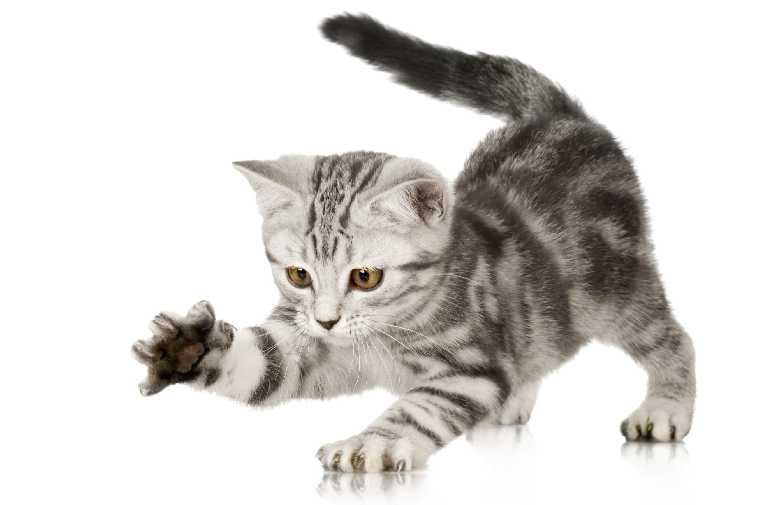 gatto-regalo-banca-russa-mutuo